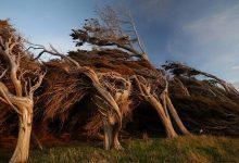 Photo of Az egyik legszelesebb hely a Földön, ahol a fák is dőlve nőnek