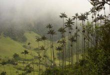 Photo of Cocora völgy – ahol világ legmagasabb pálmafái nőnek