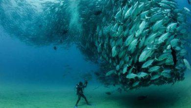 Photo of Hal-tornádó a tenger mélyén