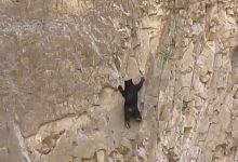 Photo of Hihetetlen ügyességű hegymászó medvék egy függőleges sziklafalon
