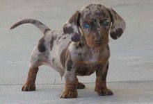 Photo of 16 különlegesen szép keverék kutya