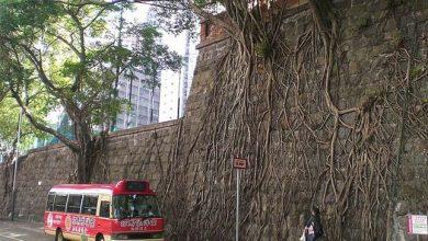 Photo of A természet utat tör magának – szokatlan helyeken növő fák