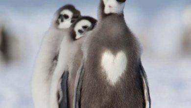 Photo of Elképesztő mintákat viselő állatok