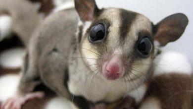 Photo of Sokszínű állatvilág – különleges kinézetű állatok
