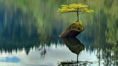 Photo of A természet utat tör magának