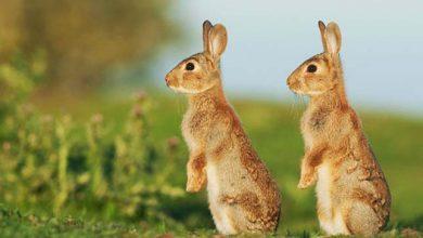 Photo of Mint két tojás – aranyos állatpárok