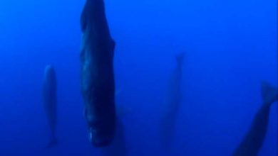 Photo of Így alszanak a bálnák