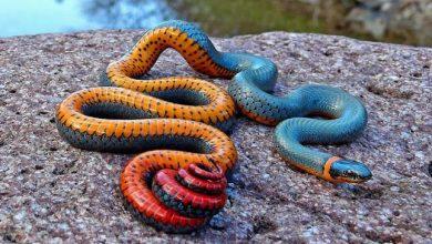 Photo of Különleges színű állatok
