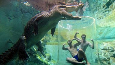 Photo of Merülés a hatalmas krokodilok közé