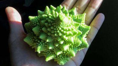Photo of Pagodakarfiol – egy különleges formájú zöldség