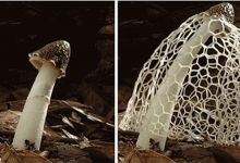 Photo of 8 látványos gyorsított felvétel a gombák növekedéséről