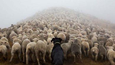 Photo of A világ legkeményebben dolgozó kutyái