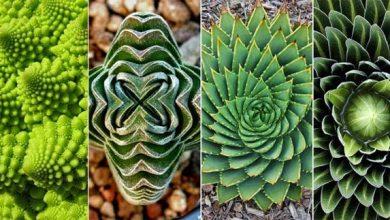 Photo of 20 gyönyörű geometriai formát alkotó növény