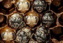 Photo of Elképesztő videó a méhek születéséről