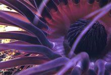 Photo of Különleges mélytengeri élőlényeket találtak a Karib-tengernél