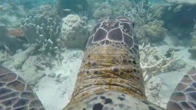 Photo of A gyönyörű Nagy-korallzátony egy teknős szemével