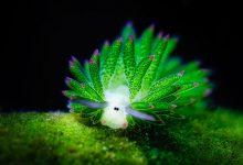 Photo of A tengerek különleges élőlényei – a színpompás tengeri csigák