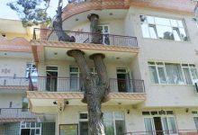Photo of Amikor a fák az épületek részévé válnak