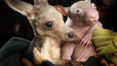 Photo of Aranyos fotósorozat aprócska állatkölykökről