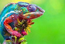 Photo of Az állatvilág legszínesebb képviselői