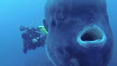 Photo of Találkozás egy békés tengeri óriással – videó
