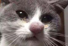 Photo of Pórul járt macskák, akik méhcsípés áldozatai lettek