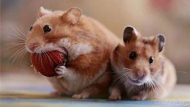 Photo of A legjobb pillanatban elkapott fotók jóízűen falatozó állatokról