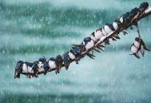 Photo of Aranyos fotósorozat egymáshoz bújó madarakról