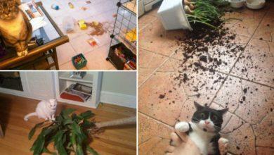 Photo of Macskák, akiknek fogalmuk sincs, hogy ki csinálhatta a felfordulást