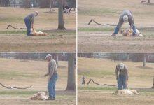 Photo of Mindent bevetett az elszánt kutya, hogy ne kelljen hazamennie a parkból