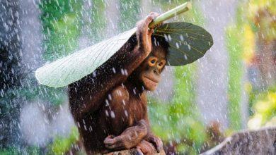 Photo of Leleményes állatok, akik a természetből kölcsönöztek esernyőt maguknak