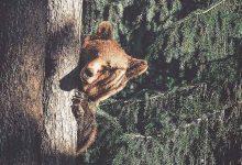 Photo of Csodálatos fotókat készít az erdők lakóiról a fiatal finn természetfotós