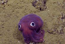 Photo of Rajzfilmbe illő élőlényt filmeztek le a kutatók az óceán mélyén