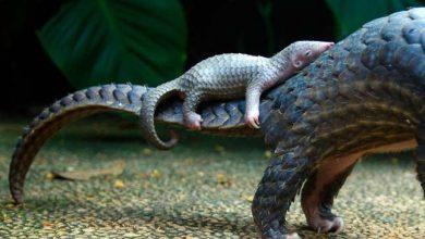Photo of Aprócska tobzoskák – aranyos fotóválogatás a veszélyeztetett faj legkisebb képviselőiről