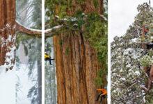 Photo of Így tudták egyetlen képben megörökíteni a világ egyik legnagyobb fáját