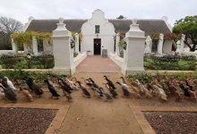 Photo of Így indul bevetésre egy dél-afrikai szőlőbirtok ezer futókacsája