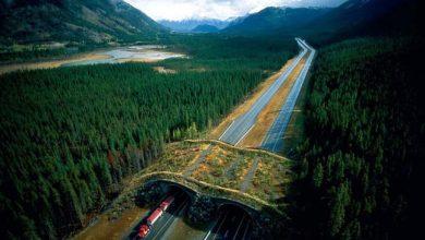 Photo of Különleges átkelőhelyek, melyeket a vadon élő állatok megmentéséért építettek