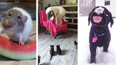 Photo of Meglepődött állatok, akik új dolgokkal ismerkednek