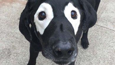 Photo of Vitiligo – bőrfestékhiány az állatoknál