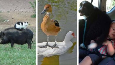 Photo of Ezek az állatok egy kicsit sem zavartatják magukat