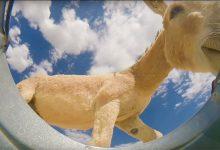 Photo of Ilyen sok állat szomját csillapítja egy vödör víz a texasi sivatagban