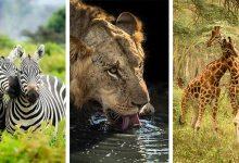 Photo of Lenyűgöző képek a kenyai vadvilág változatos élővilágáról