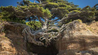 Photo of Különleges fák, melyek igazi túlélőnek bizonyultak