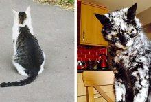 Photo of A legviccesebb és legkülönlegesebb mintákat viselő macskák
