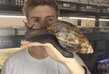 Photo of A világ talán legnagyobb csigájáról nehéz elhinni, hogy valóban létezik