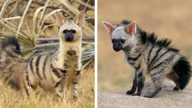 Photo of Különleges kinézetű állat rejtőzik a föld alatt az afrikai vadonban