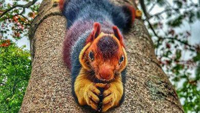 Photo of Színpompás mókus ugrál az ágakon az indiai erdők mélyén
