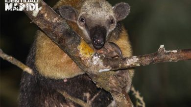 Photo of Több mint száz új fajt találtak a világ egyik legérintetlenebb helyén