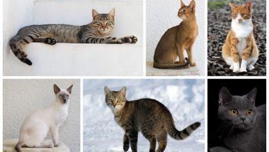 Photo of A macskák képesek megkülönböztetni az emberek által kimondott szavakat