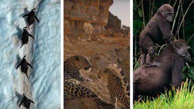 Photo of Attenborough és bolygónk csodái – hazánkban is vettek fel jeleneteket a lenyűgöző természetfilmhez